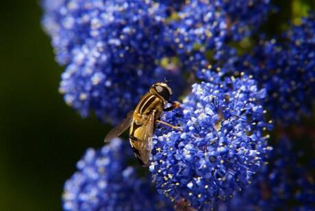 Pretty on Blue