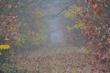 Mist en herfst mystiek