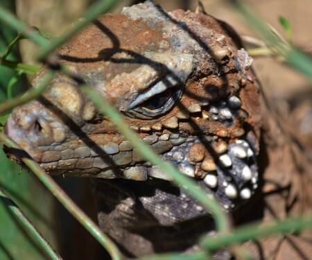 Kind of 'Wildlife' - - - foto door Kyradeweert op 12-07-2018 - deze foto bevat: cuba, dierentuin, dieren, wildlife, hagendis, hagendisachtige
