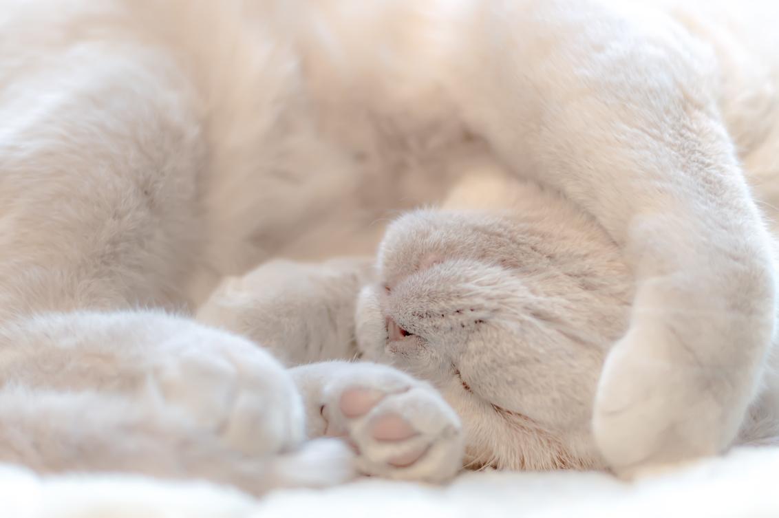 Ook een manier van slapen - Ik heb altijd een beetje moeite gehad met de triljoenen haartjes die een dier heeft. Wat moet ik daar nu mee? En als ik de foto verscherp, dan wordt  - foto door FrancescaOostland op 16-01-2016 - deze foto bevat: roze, kitten, poes, dieren, huisdier, kat, slaap, slapen, Brits Korthaar