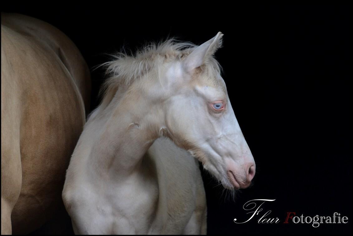 Veulen - Veulen - foto door FleurFotografie op 28-11-2012