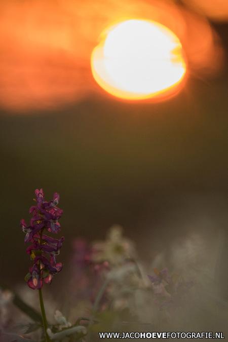 Holwortel - Wat een heerlijke avond met een schitterende zonsondergang. - foto door jacocanon op 27-03-2017 - deze foto bevat: natuur, zonsondergang, natuurfotografie, dickninge