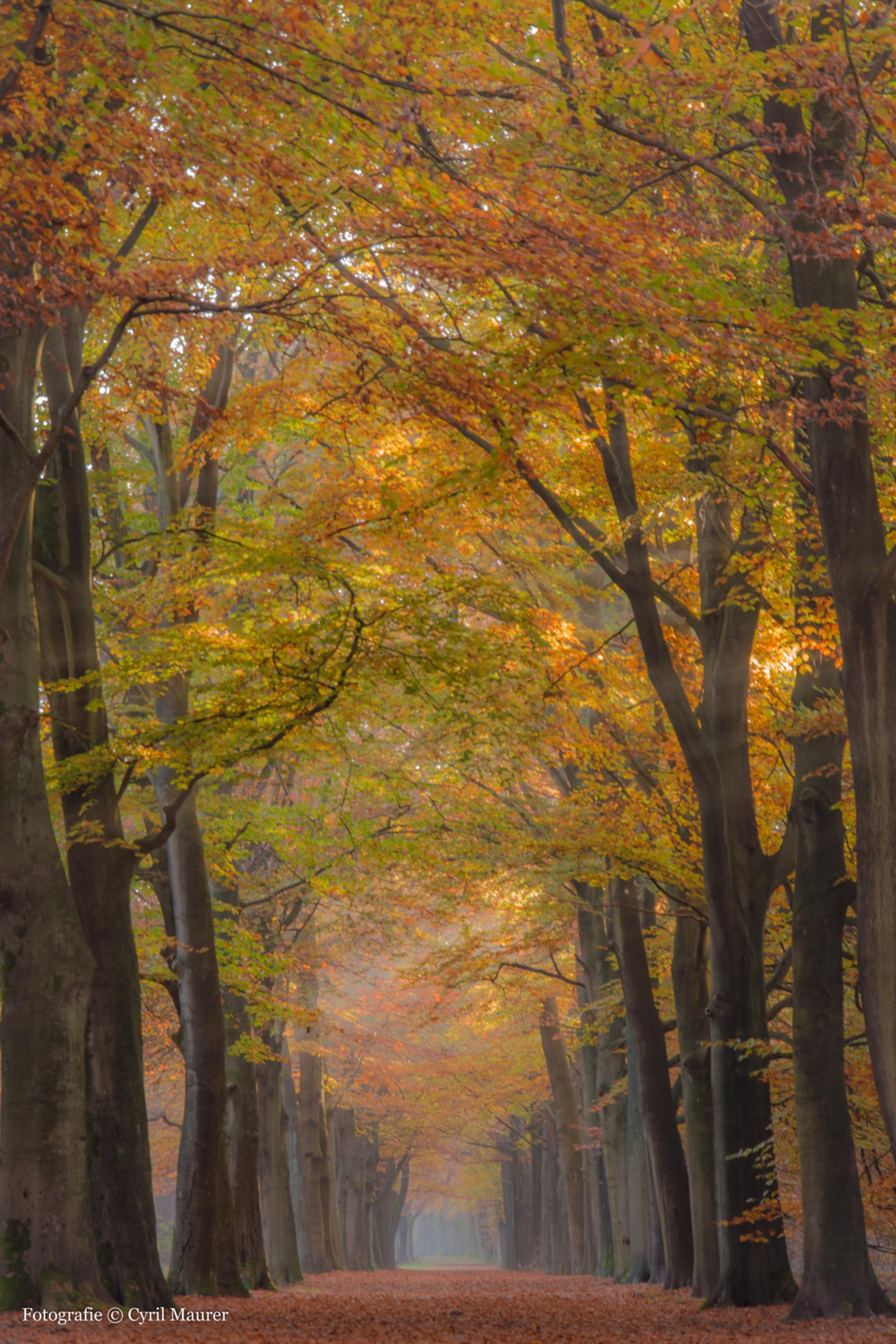 Herfst kleuren pracht - Hallo beste meden zoomers jullie zullen wel gemerkt hebben dat ik niet meer zo actief was op zoom . Ben erg druk geweest met een nieuwe baan zoeken . - foto door sipmaurer op 11-12-2015 - deze foto bevat: natuur, herfst, landschap, bos, bomen, kleurijk