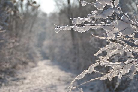 Endless snow