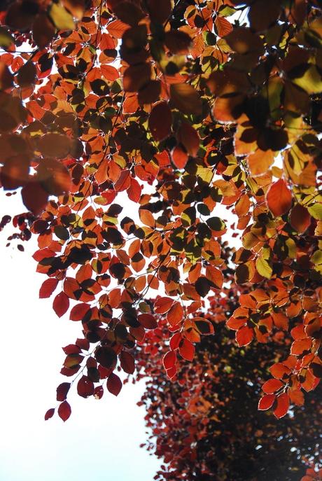 mooi bladerdek beukenboom