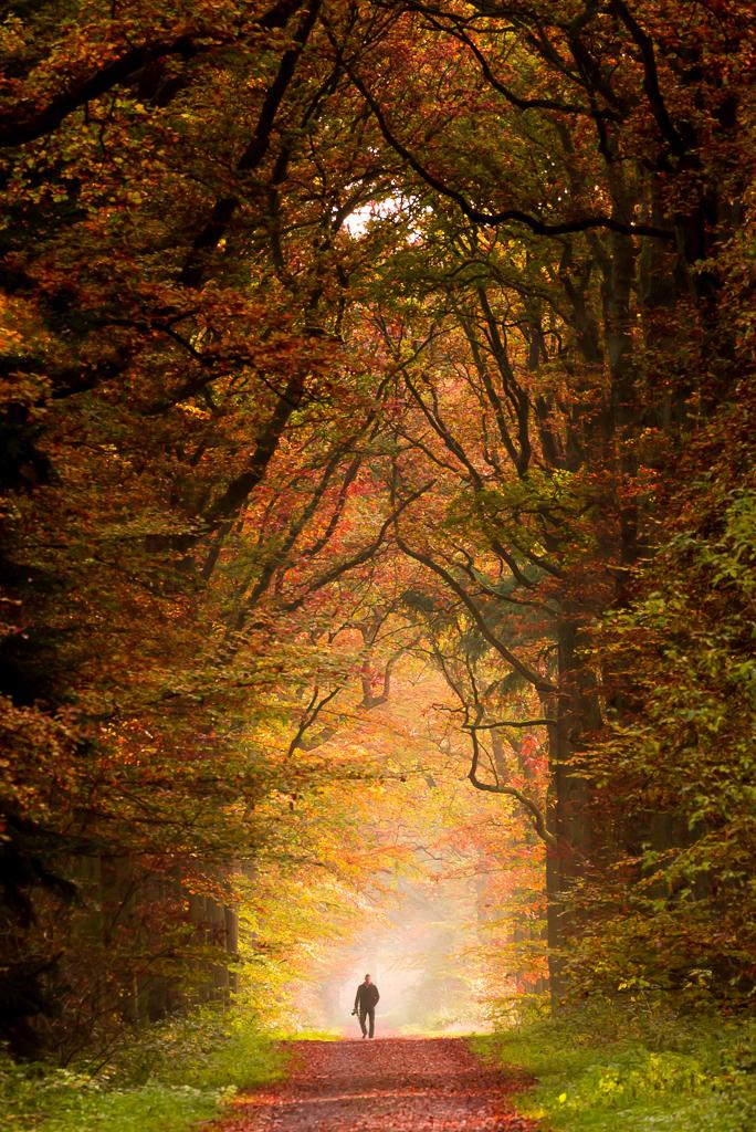 Heeze 46 - Een mistige morgen in de Herbertusbossen in Heeze levert meestal mooie plaatjes op, zoals ook deze collega fotograaf gedacht moet hebben. Ik heb het  - foto door Deshamer op 29-03-2016 - deze foto bevat: kleuren, bladeren, natuur, licht, herfst, kasteel, landschap, mist, pad, tegenlicht, zonsopkomst, bomen, fotograaf, takken, nederland, weg, laan, wandelaar, heeze, boschlaan, noord-brabant, herbertusbossen