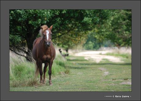 Paardebeeld