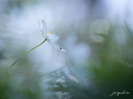 Magic White...