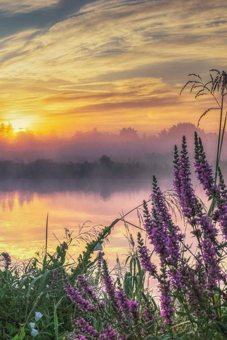 Mooie, nevelachtige zonsopkomst in Ommen