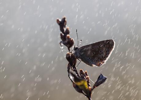 Icarus in the rain.