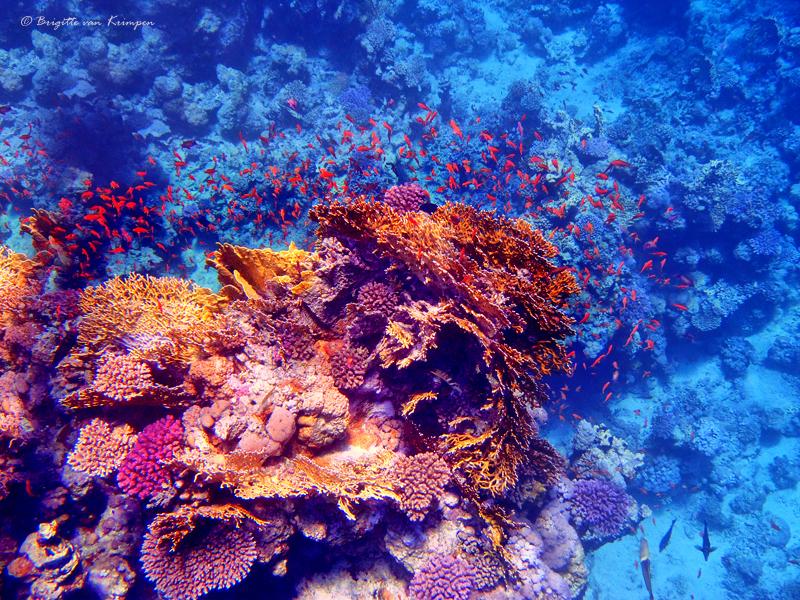 Fish Delight - Het was weer genieten van alle mooie visjes tijdens mijn snorkel vakantie in Egypte - foto door Puck101259 op 07-01-2018 - deze foto bevat: strand, onderwater, water, oranje, vakantie, vissen, zwemmen, koraal, egypte, duiken, snorkelen