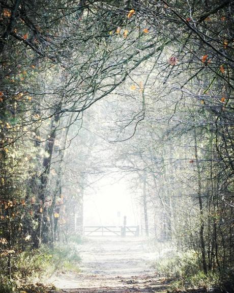 Hier ga je de mist in....