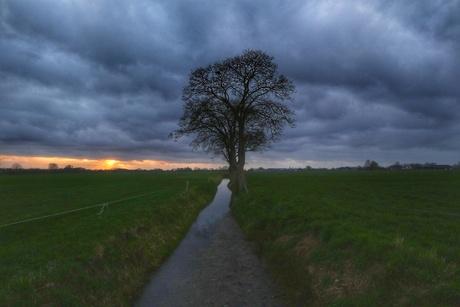2 bomen