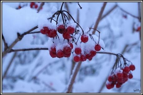 sneeuwbesjes
