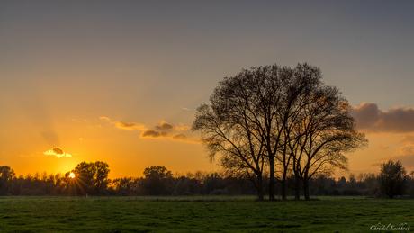 Gouden licht over de Scheldemeersen