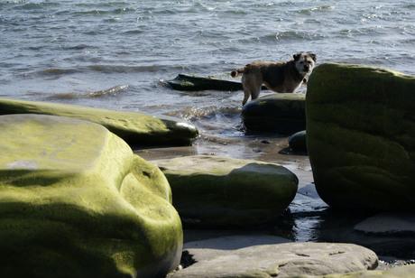 Heerlijk, die Schotse Zee!