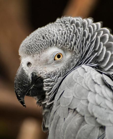 Aren't I a pretty bird?