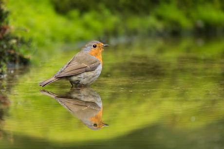 Reflected Robin