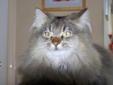 Portrait of Mika