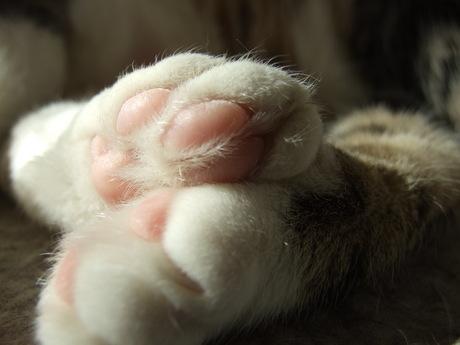 katten teentjes