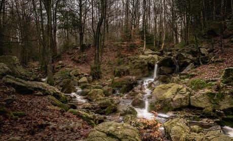 Geestreinigers in het woud
