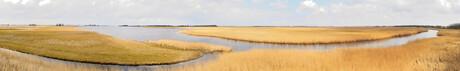 Rietvelden bij Lauwersmeer