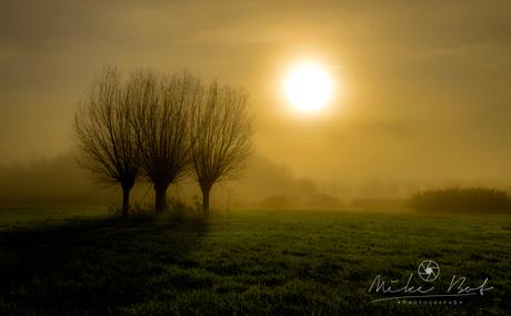 drie boompjes zonnebadend