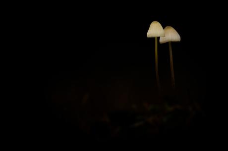 lampjes in het donker