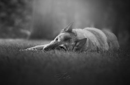 Destiny - 13-jarige herder Destiny, gefotografeerd in het Zuiderpark. - foto door HannahV op 11-08-2017 - deze foto bevat: oud, groen, natuur, huisdier, bos, hond, herder, zwartwit