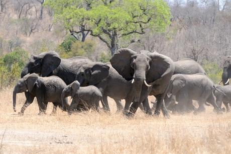 olifant breekt uit kl.jpg