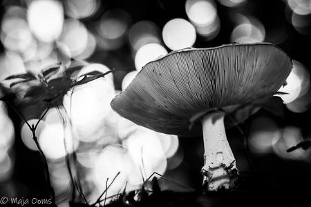 Drama.... - Ik ontdek steeds meer de omzetting naar zwart wit. Vind het zelf een heel gaaf effect geven aan foto's...Zo ook bij deze....het voegt wat Drama toe.. - foto door mb83 op 26-09-2018 - deze foto bevat: licht, paddenstoel, bewerking, zwartwit, contrast, bokeh, lightroom