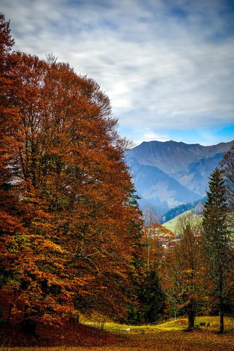 herfst in Mittelberg