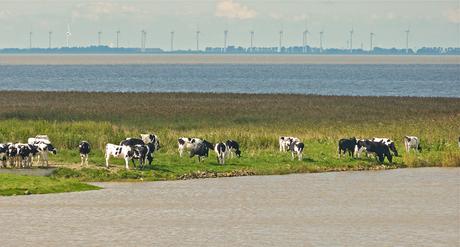 Hollandschap