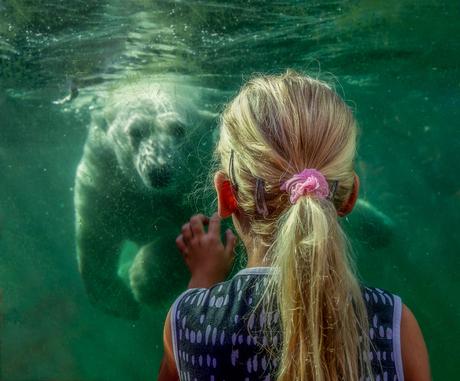 De ijsberenfluisteraar