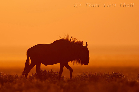 Afrika avond