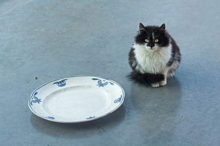 Poes - Hongerige poes... Zwerfkatten, verwilderde huiskatten... lieden die het weten kunnen blijven maar inpraten op het vrouwtje en vertellen dat je ze ei - foto door kosmopol op 07-02-2012 - deze foto bevat: poes, kat, kosmopol