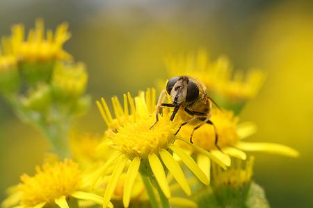 Laatste zweefvliegen - Helaas is de tijd van de insecten bijna voorbij, ik ga me nu op de paddestoelen storten - foto door Martine van Doorn-Bos op 19-10-2011 - deze foto bevat: paddestoel