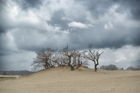 IMGP6425 -1 - - - foto door johntomeij op 23-03-2020 - deze foto bevat: duinen