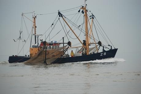 De garnalen visser