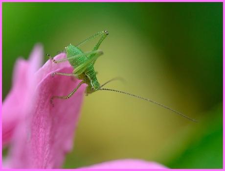I am Jiminy Cricket