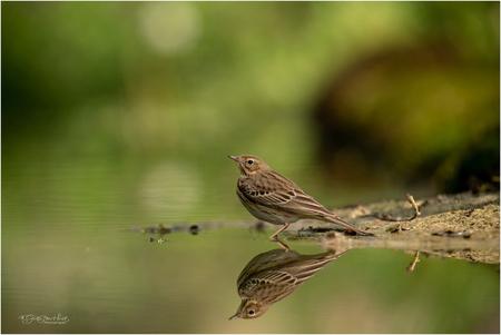 Wat is de reflectie? - Soms is het water zo glad als een spiegel en kun je bijna het verschil niet zien tussen de reflectie en het origineel. Ook in dit shot is de reflecti - foto door Gertj123 op 27-04-2020 - deze foto bevat: water, natuur, dieren, vogel, zangvogel