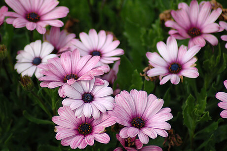 bloempjes.. 2