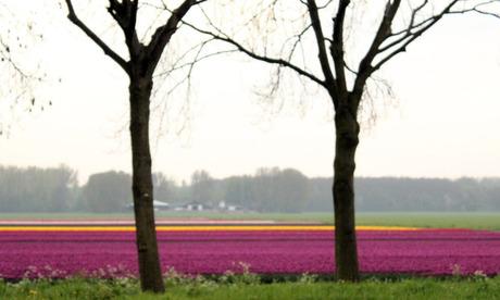 Lente in de polder