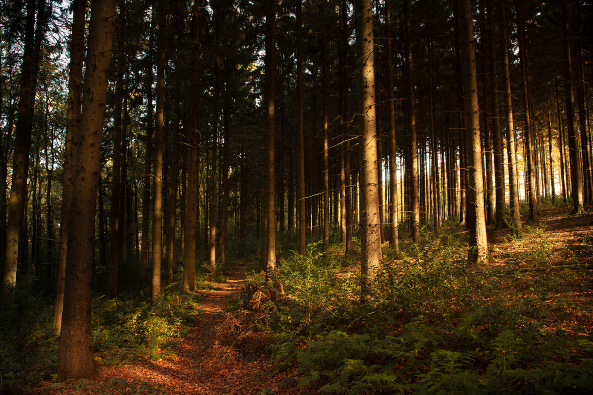 VIJLENERBOS2 - Vijlenerbos Zuid-Limburg - foto door TonGeers op 16-11-2020 - deze foto bevat: natuur, licht, herfst, bos, bomen, limburg, vijlenerbos - Deze foto mag gebruikt worden in een Zoom.nl publicatie