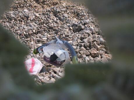door het oog van een schelp van een zee-egel
