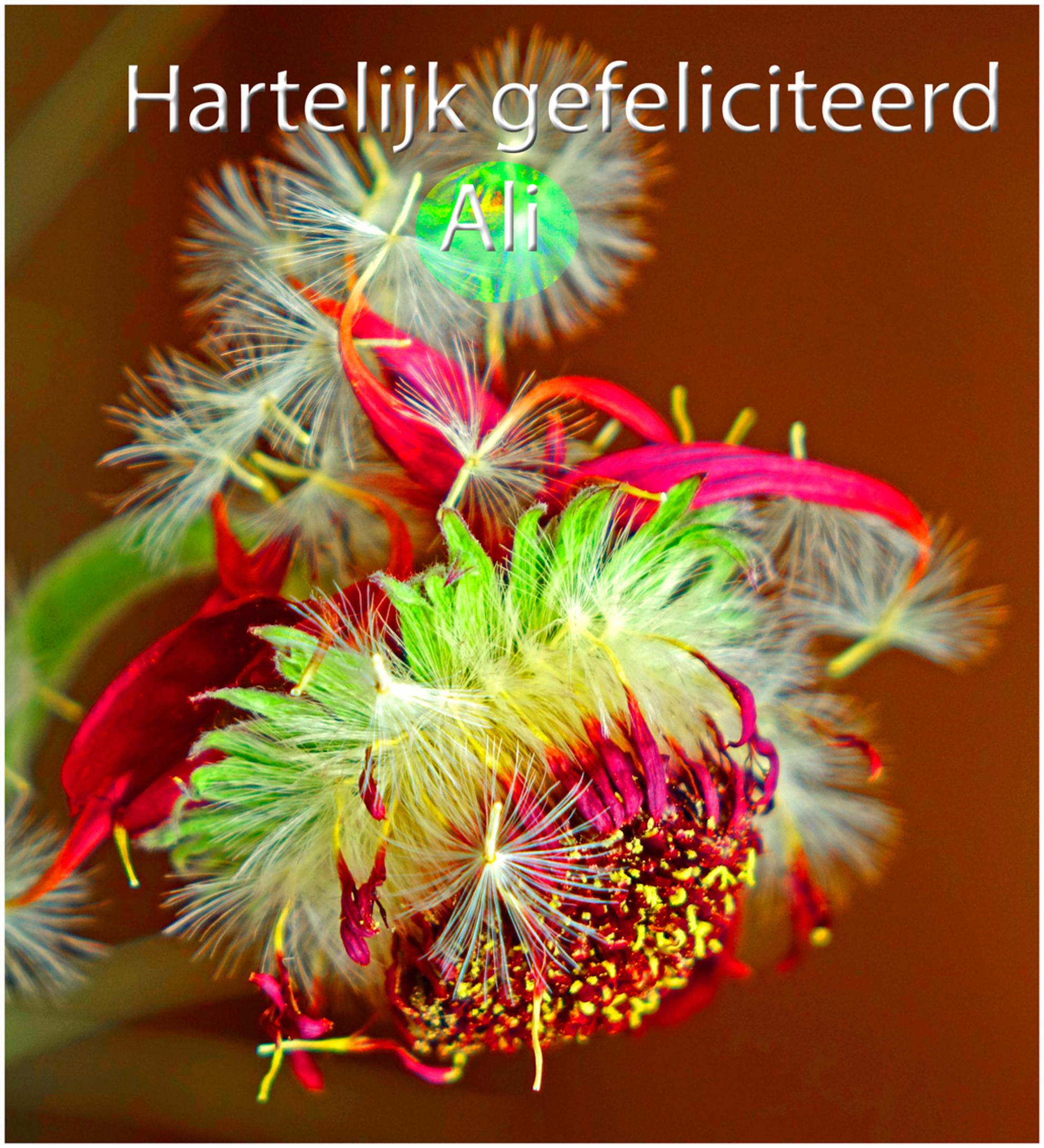 Ali - Alhoewel Ali niet aanwezig is op dit moment wil ik toch even een felicitatie voor haar verjaardag plaatsen. groeten en een fijn weekend, Nel - foto door Nel Hoetmer op 16-07-2016 - deze foto bevat: bloem, ali, verjaardag, nel - Deze foto mag gebruikt worden in een Zoom.nl publicatie