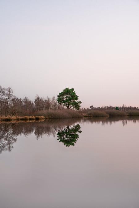 DSC_27510 - Rust - foto door anneummenthun op 26-02-2021 - deze foto bevat: water, natuur, spiegeling, zonsopkomst, bomen