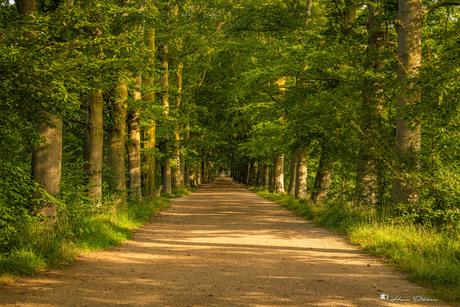 Bomenlaan Oud-Valkenburg
