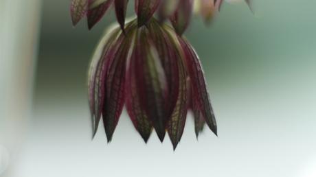 Hangende bloem