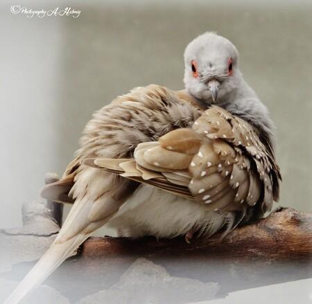Duifje - kleintje - foto door Anja Helmig op 12-04-2021 - deze foto bevat: vogel, been, bek, veer, organisme, natuurlijk materiaal, vleugel, comfort, staart, terrestrische dieren